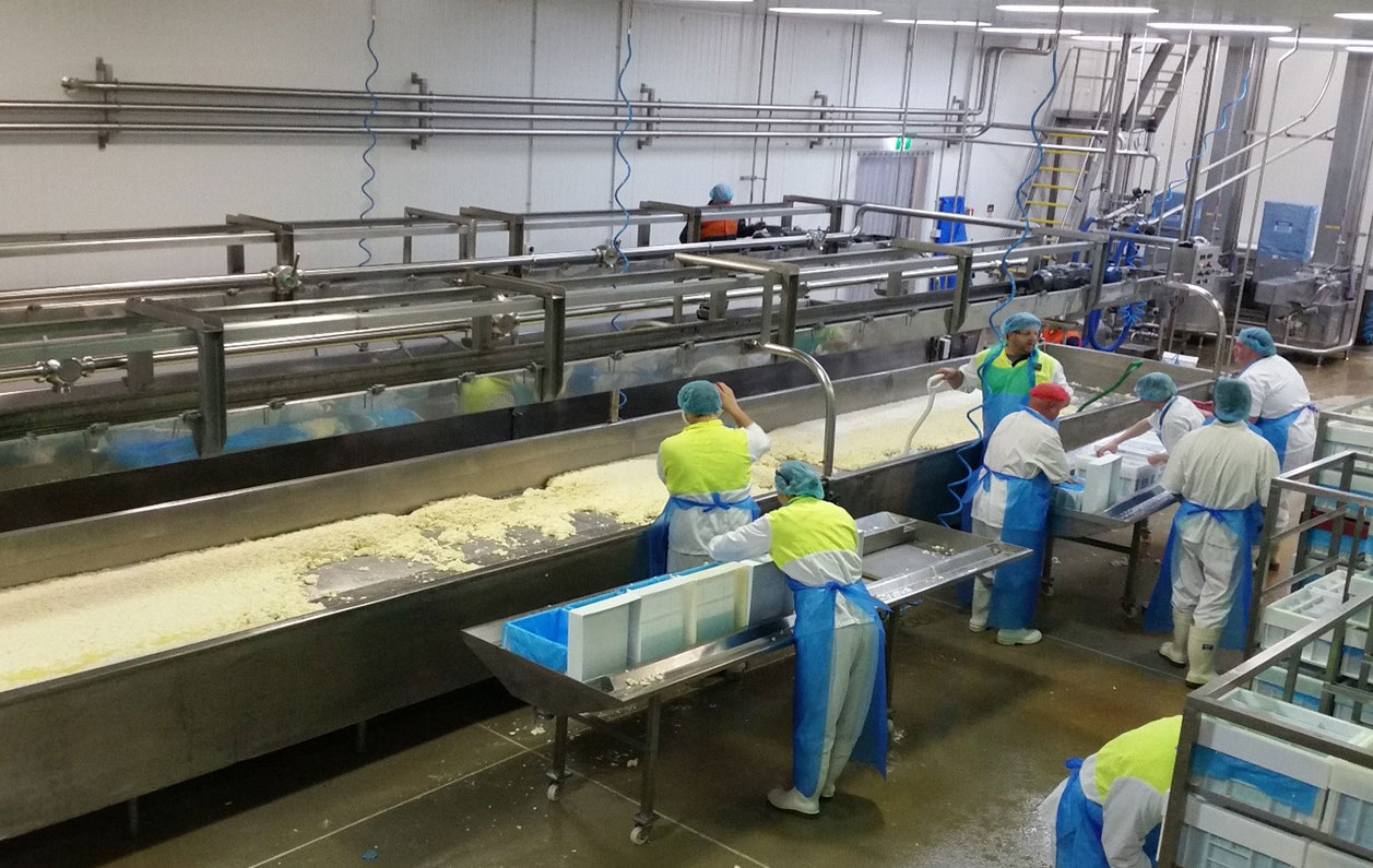 Automation equipment for cheese making