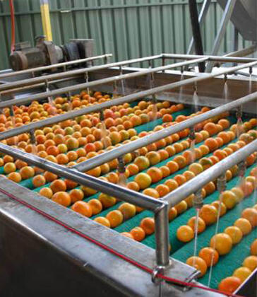 Manufacturing fire recovery for oranges